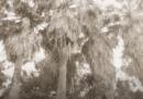 ZEN-ON – Wyrzucam (album Hate Park)
